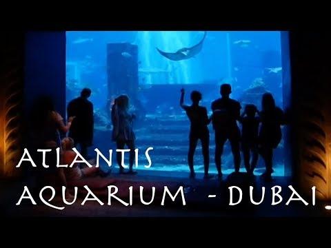 Tour Atlantis Aquarium | Dubai |  Part 2 | Vlog 5