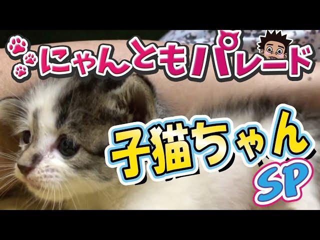 【ねこ動画まとめ】子猫ちゃんSP〜にゃんともパレード〜