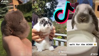 Download The CUTEST Bunnies on TikTok | Bunny COMPILATION