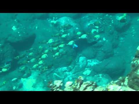 Snorkeling Lanai, Hawaii