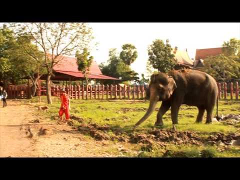 สารคดี เพนียดคล้องช้าง