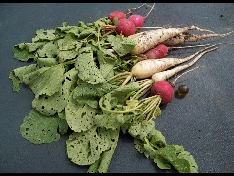 Gardening Trivia \