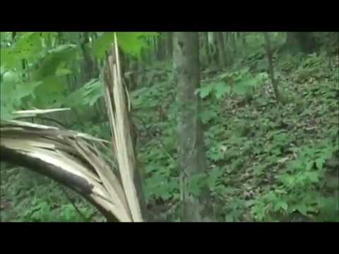 Trackway Leads To Bigfoot Hideout *NEW*