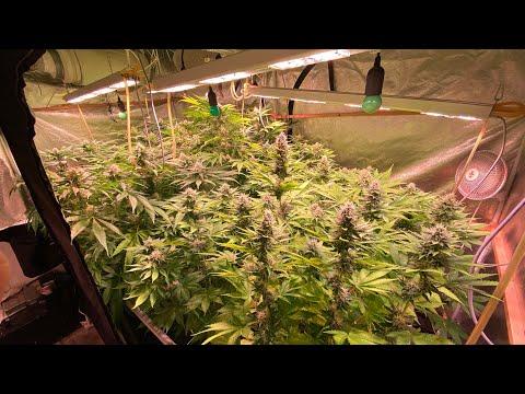 Конопля в руках минус купить в минске семена марихуаны