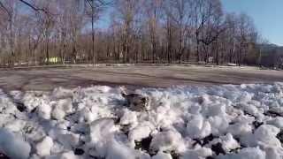 Щенок Майк Маламут гуляет зимой в 2 месяца
