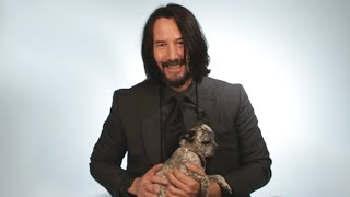 Baixar Keanu Reeves Plays With Puppies While Answering Fan Questions