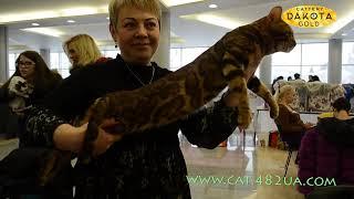 Выставка кошек Winner Cat, Харьков 04 05 02 2017 4 часть