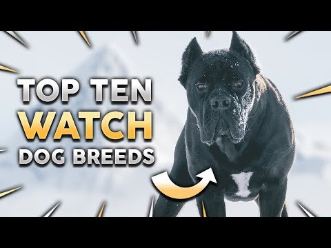 TOP 10 WATCH DOG BREEDS IN THE WORLD!