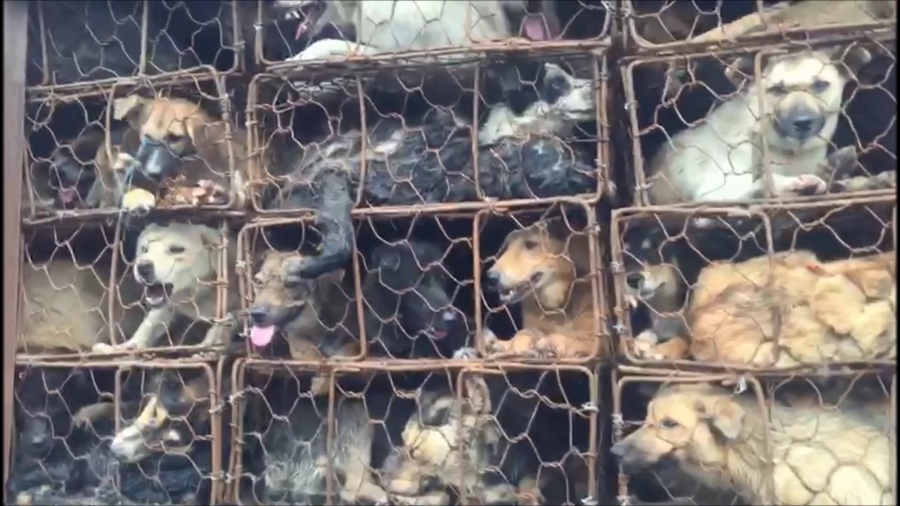 Activists Rescue Nearly 1,000 Dogs and cats from ... - photo#9