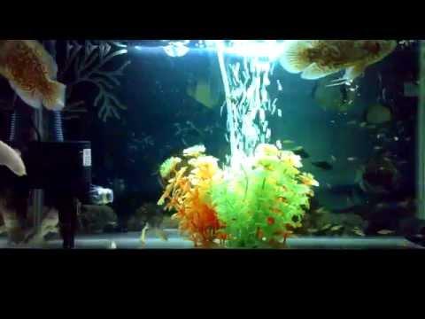My Aquarium 22.07.2013