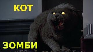 Сибирские кошки - кот зомби / Siberian cat - Cat zombies