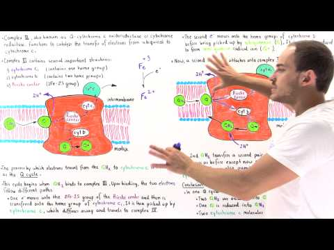 Q-Cycle and Complex III of Electron Transport Chain