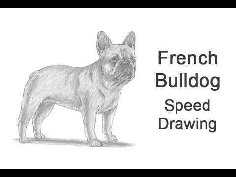 French Bulldog Time-lapse / Speed Drawing