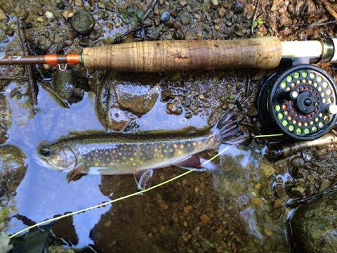 Native brook trout fly fishing pa 2017 youtube for Free fishing day 2017 pa