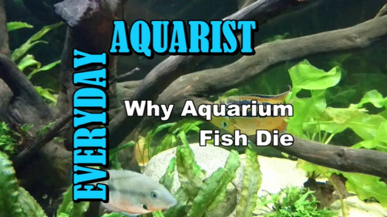 Fish in tank died - 3 Reasons Why Aquarium Fish Die