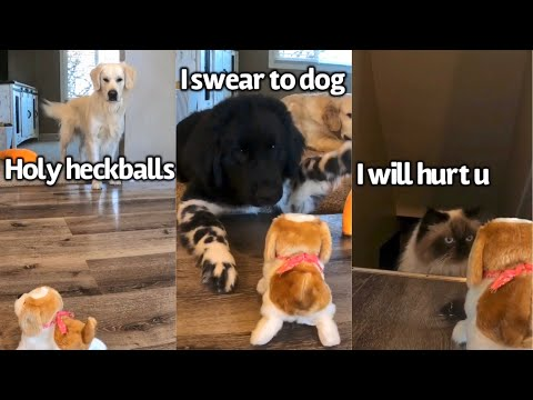 Dogs React To Jumping Dog Toy | Send Help Y'all We Have An Imposter