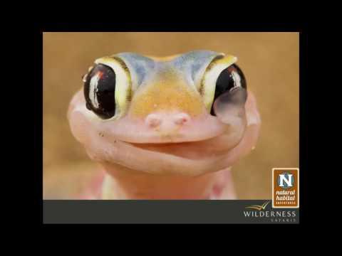 Webinar | Namibia's Unique Wildlife in the World's Oldest Desert
