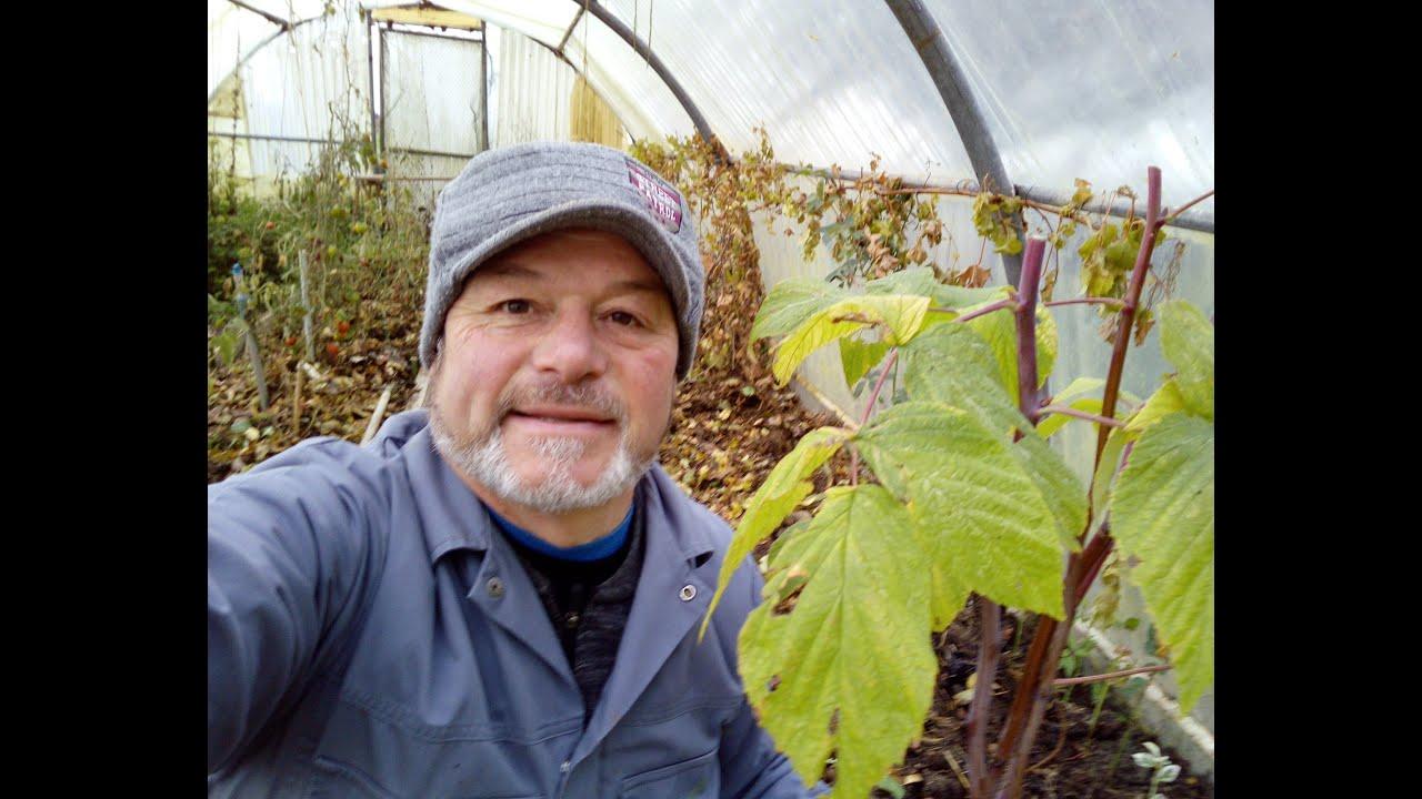 Planter des tomates dans une mauvaise terre - YouTube