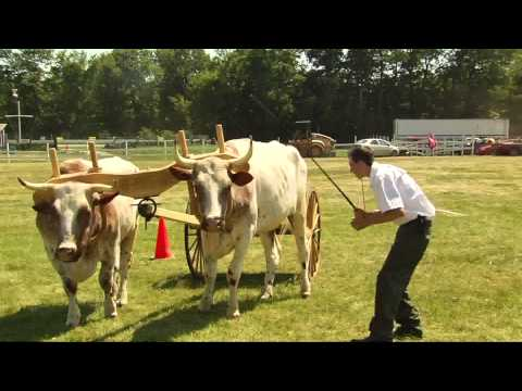 6/30/14 Undergrad Research at UVM & 4-H Working Steer on Across The Fence