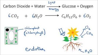 Photosynthesis & Uses of Glucose | GCSE Science | Biology | Get To Know Science