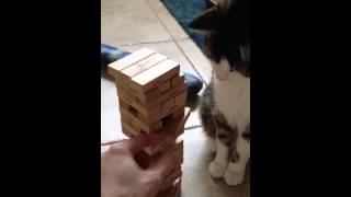 ハラハラドキドキのジェンガに興じるのは飼い主と…1匹の猫?!