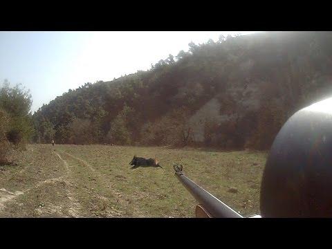 hatay  antakya  domuz avı 2014. wild boar hunting