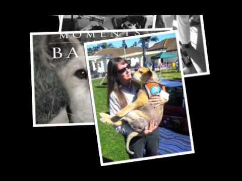 Moments with Baxter - A tribute to the world's best therapy dog