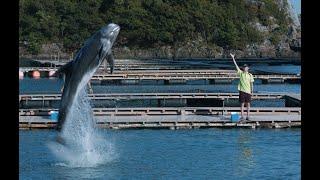 『ボクはボク、クジラはクジラで、泳いでいる。』予告