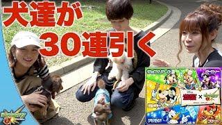 【モンスト】公式の裏側でミッキーコラボ ガチャを犬3匹に引いてもらったよ!ぱなえさん&タイガー桜井さんと一緒に撮影!【よきゅCH】