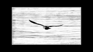 Наутилус Помпилиус - Одинокая птица