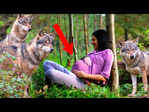 Девушка родила в лесу среди волков. Её беременную выгнали из дома  родители. А спустя много лет...