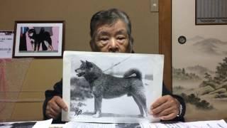 第25回『日本犬に就いて金指光春が語る』 柴犬の歴史の中にうもれた系...
