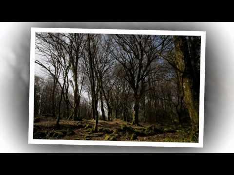 Barna Woods Galway