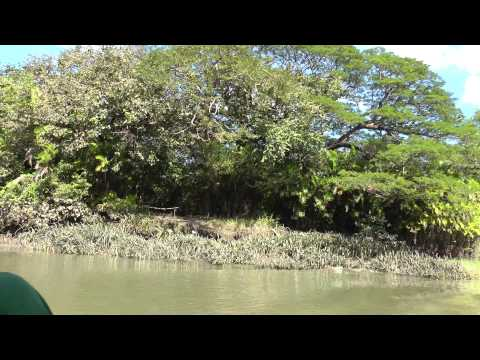wildlife boat tour Palo Verde National Park, Costa Rica (part 3 of 3)