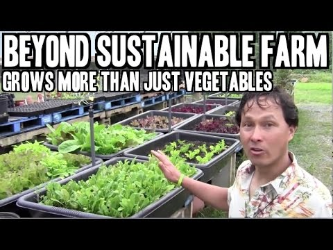 Beyond Sustainable Farm Grows More than Vegetables to Feed C
