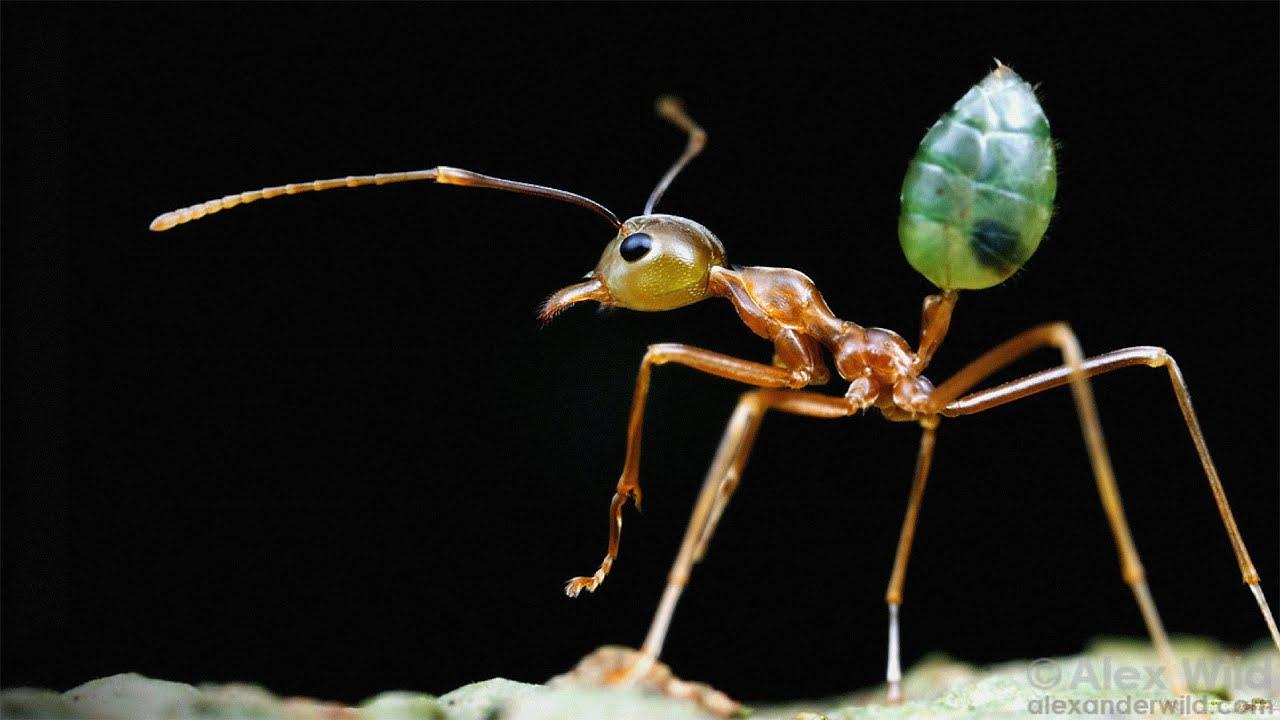 Секс человека с насекомыми