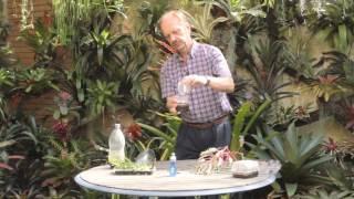 Reproducción de Bromelias por Semillas