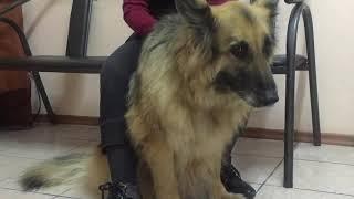 Акупунктура для животных- ветеринарная клиника БАЛУ, г.АЛМАТЫ