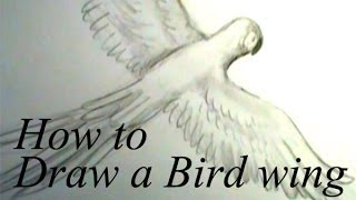 How to draw a bird wing