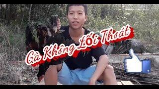 Gambar cover Rùa Vlogs -🔥Gà Không Lối Thoát (Chicken No Way Out)💧
