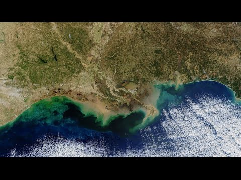 Gulf of Mexico 'dead zone' is biggest on record