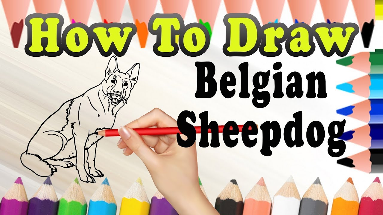 How To Draw A Belgian Sheepdog Dog Draw Easy For Kids Youtube