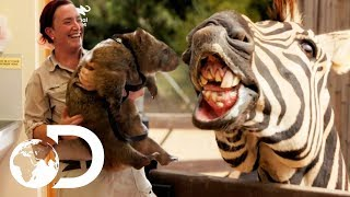 Meet The Cute And Mischievous Animals Of Australia Zoo! | Crikey! It