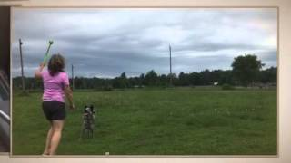 K9 Country Adventures - Ottawa Dog Training, Boarding And Daycare