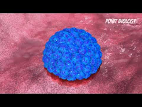 main-causes-of-infertility-.-urdu-hindi-tutorials