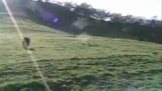 Hiking with cows in Walnut Creek - Views of Mount Diablo - Patrick Schwerdtfeger