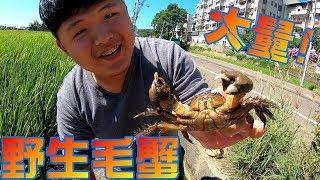 【衝撃】馬路邊灌溉用水路捕獲大量野生毛蟹Taiwan Catch the hairy crab台湾高級カニを捕まえる!