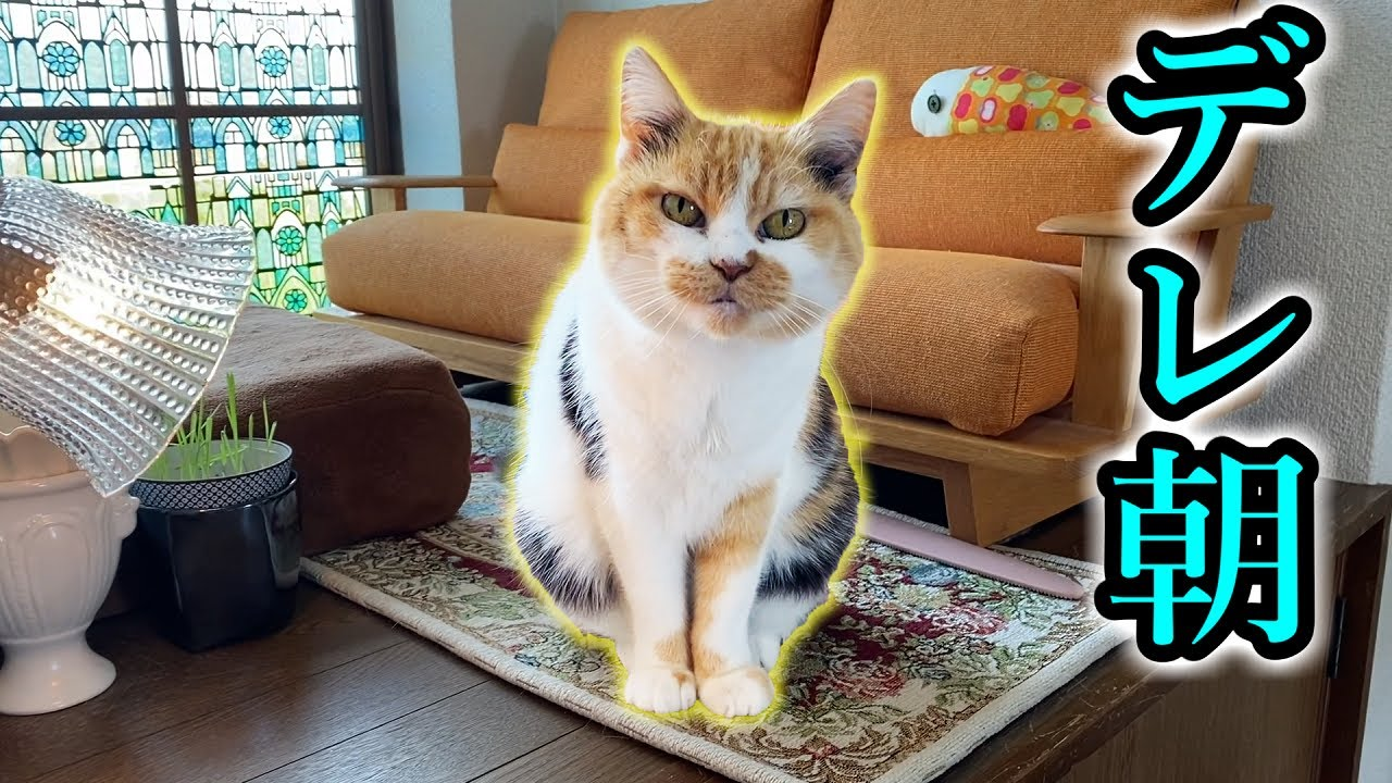 三毛猫まりものモーニングデレ