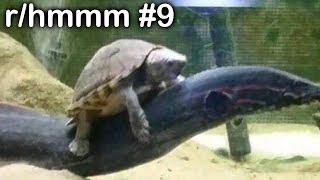 r/hmmm Best Posts #9