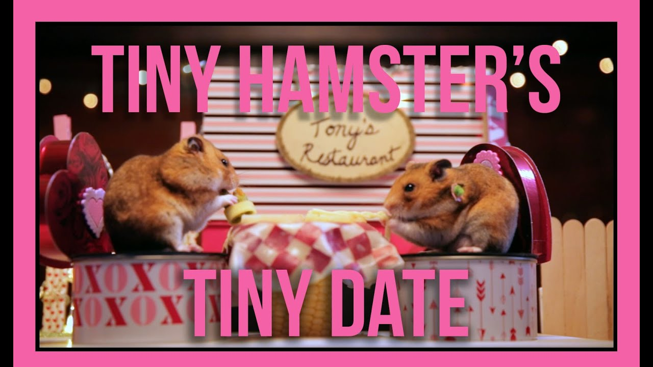 Tiny Hamsters Tiny Date Ep 5 YouTube – Hamster Valentine Cards